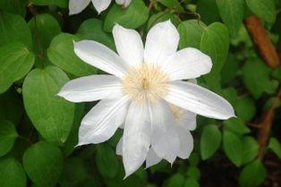 花の郷滝谷 023