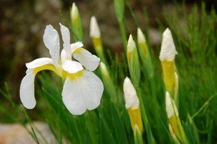 花の郷滝谷 028