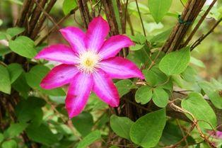 花の郷滝谷 031