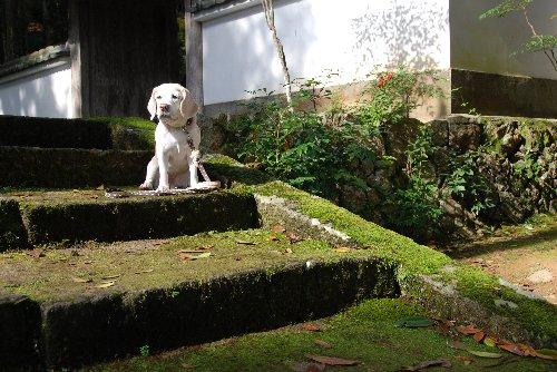 2011・11・13洞光寺2