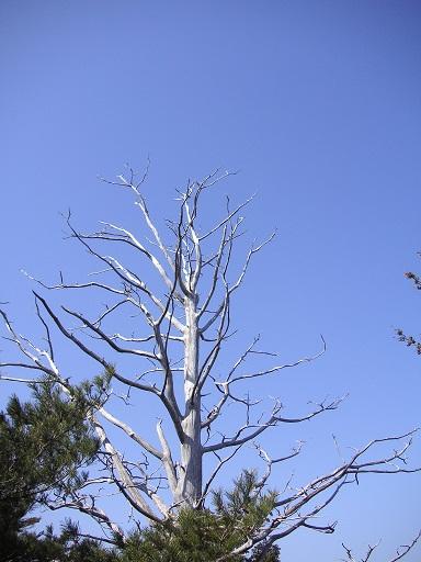 オブジェな木