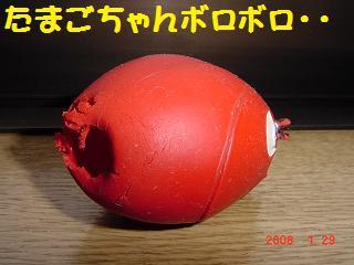たまごちゃん赤