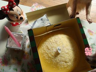 ケーキと鼻