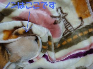 ノン 毛布