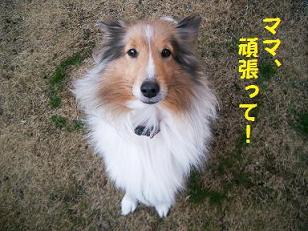 のん・チェル 4