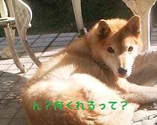 のん・チェル 01