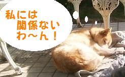 のん・チェル 02