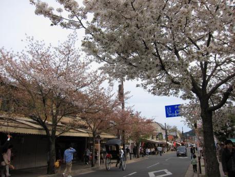 2011年4月17日 嵐山 5