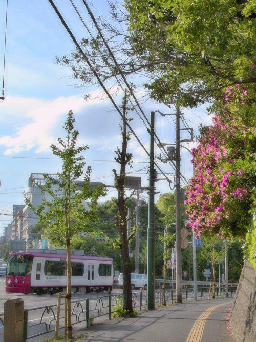 都電荒川線 王子駅前~飛鳥山