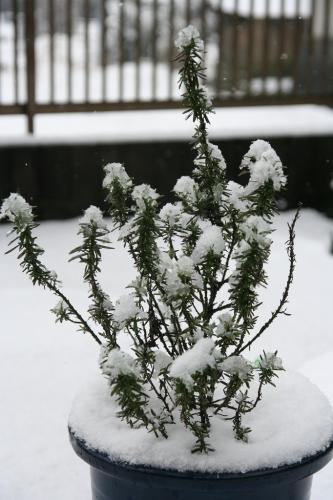 2008_02_03雪4