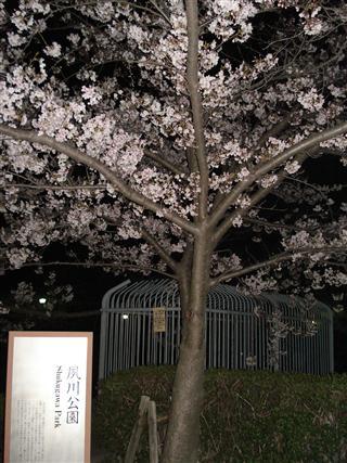 夙川公園 1