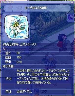 エーデルワイスの花
