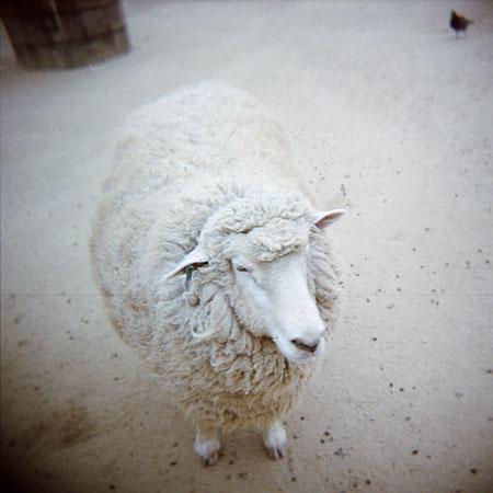 09_sheep.jpg
