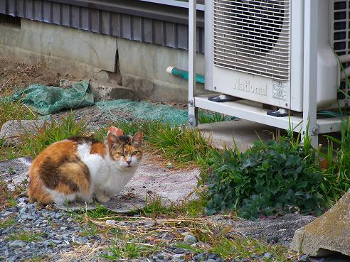 通りすがりに見かけた猫(724)