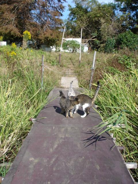 Tさん餌場の猫たち