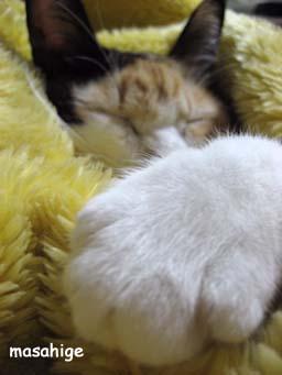 IMG_6280猫の手