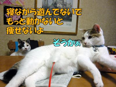 110613-03.jpg