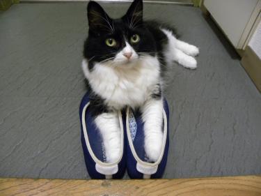 靴くり子3