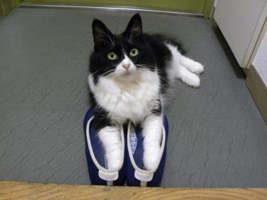 靴くり子2