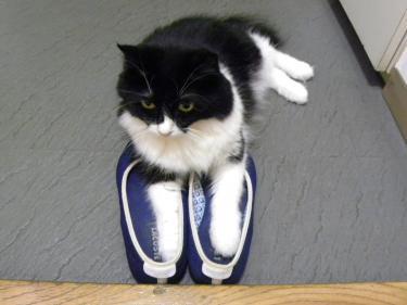 靴くり子1
