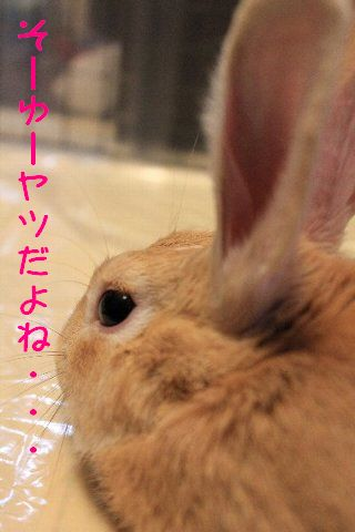 IMG_1800-moji-kiss.jpg