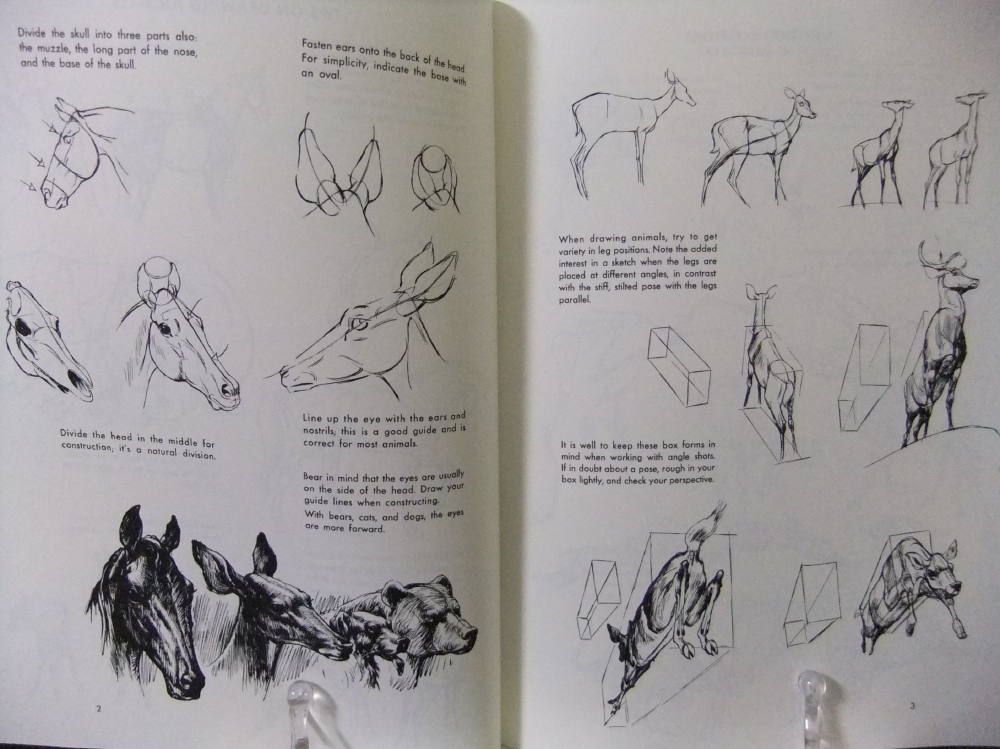 THE_ART_OF_ANIMAL_DRAWING_00.jpg