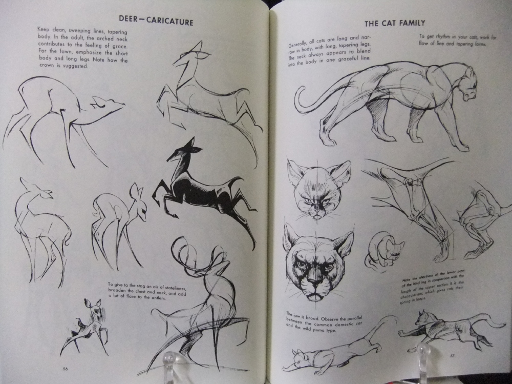 THE_ART_OF_ANIMAL_DRAWING_04.jpg