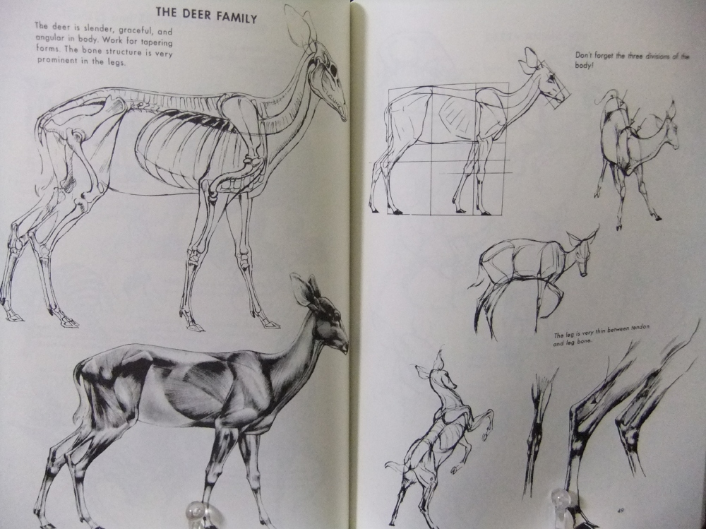 THE_ART_OF_ANIMAL_DRAWING_06.jpg