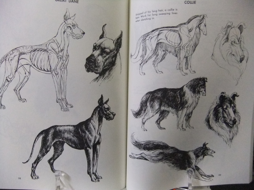 THE_ART_OF_ANIMAL_DRAWING_09.jpg