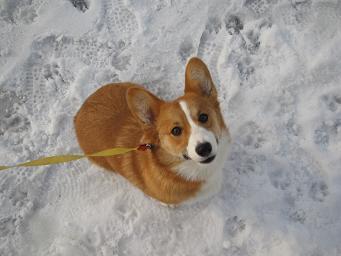 冬大好き!