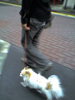お散歩タイムはウキウキウォッチン!