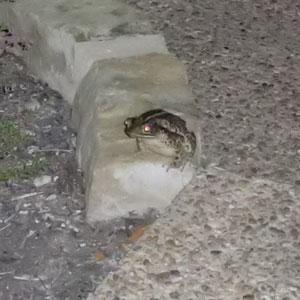 frog10061103.jpg