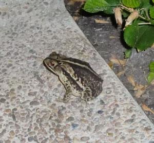frog10061104.jpg