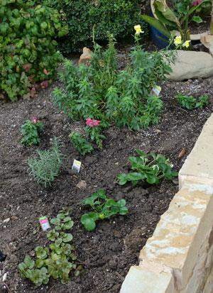 garden1202.jpg