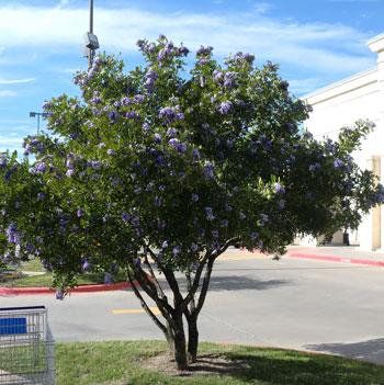 wisteria1201.jpg
