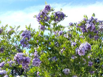 wisteria1202.jpg