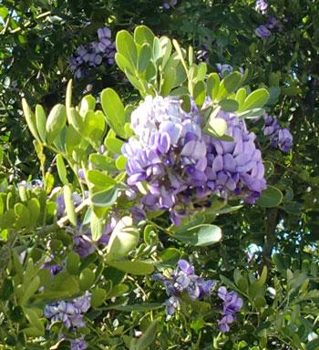 wisteria1203.jpg