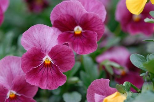 マクロなお花