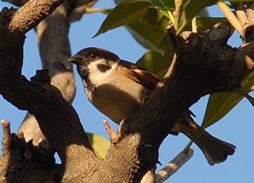 隅田公園の鳥