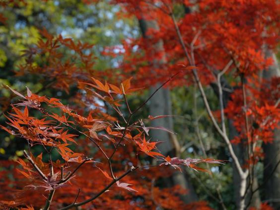20071201上野公園0057-1