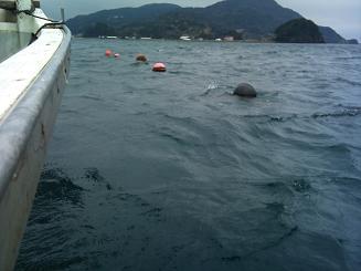 20110319魚屋 (11)