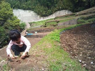 20110504筍と箱苗 (4)