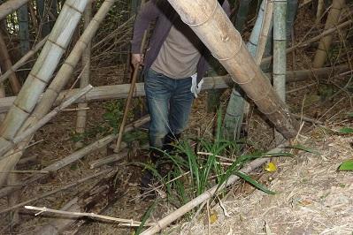 20110503筍掘り (2)