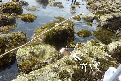 20110504アラカブ釣り (3)