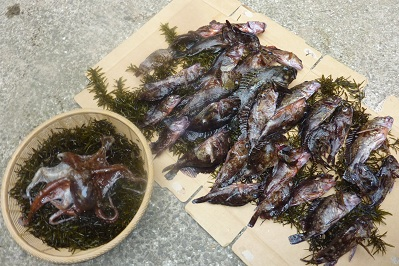 20110504アラカブ釣り (9)
