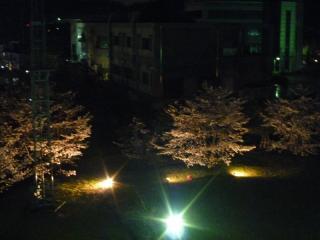 20110408桜
