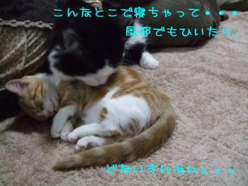 2008_02160101.jpg