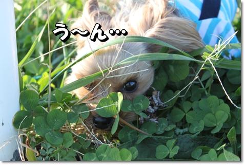 IMG_6041.jpg