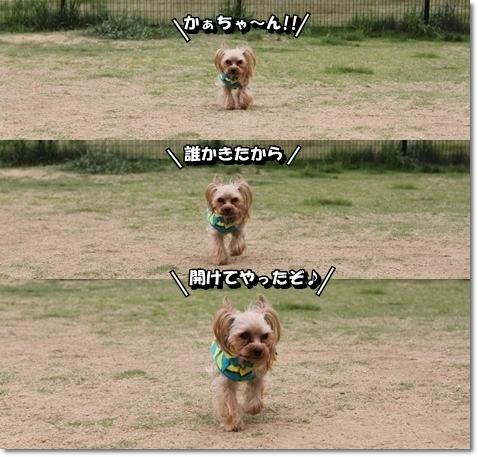 IMG_6385.jpg