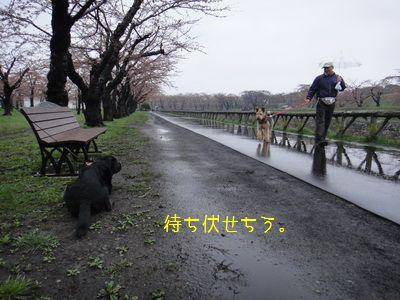 2011 05 01_7320